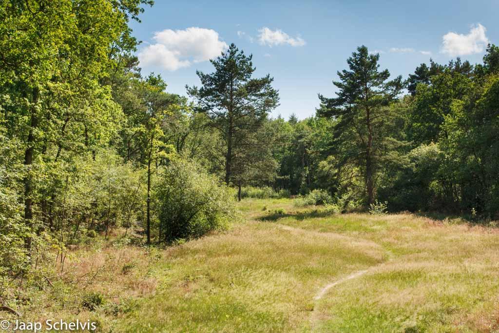 Gebieden fotograferen Natuurfotografie.nl:Noordlaarderbos