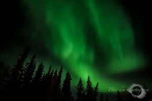 Groen noorderlicht met scherpe sterren en bomen. - Fotograaf: Peter den Hartog