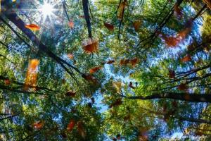 Herfstwind zorgt voor vallend blad, rechtomhoog gefotografeerd met fisheye lens. - Fotograaf: Johan van der Wielen