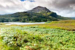 Varens in de wind in het Schotse berglandschap. - Fotograaf: Johan van der Wielen
