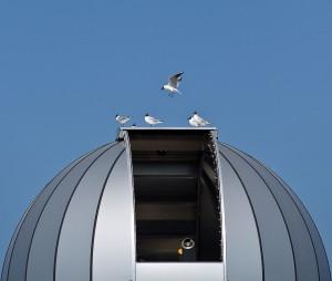Grafisch beeld: kokmeeuwen op het dak van de sterrenwacht.  - Fotograaf: Arno ten Hoeve