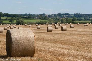 Graanoogst, grain harvest – Otto Kalkhoven – Buiten-beeld – 117491