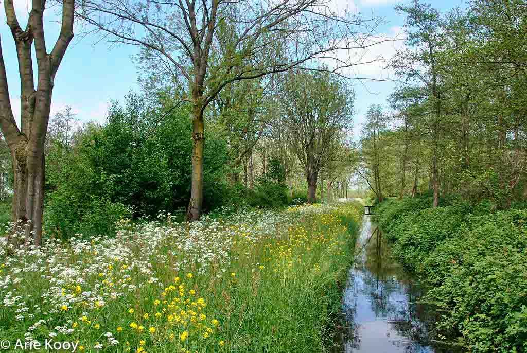 Gebieden fotograferen Natuurfotografie.nl:Loetbos