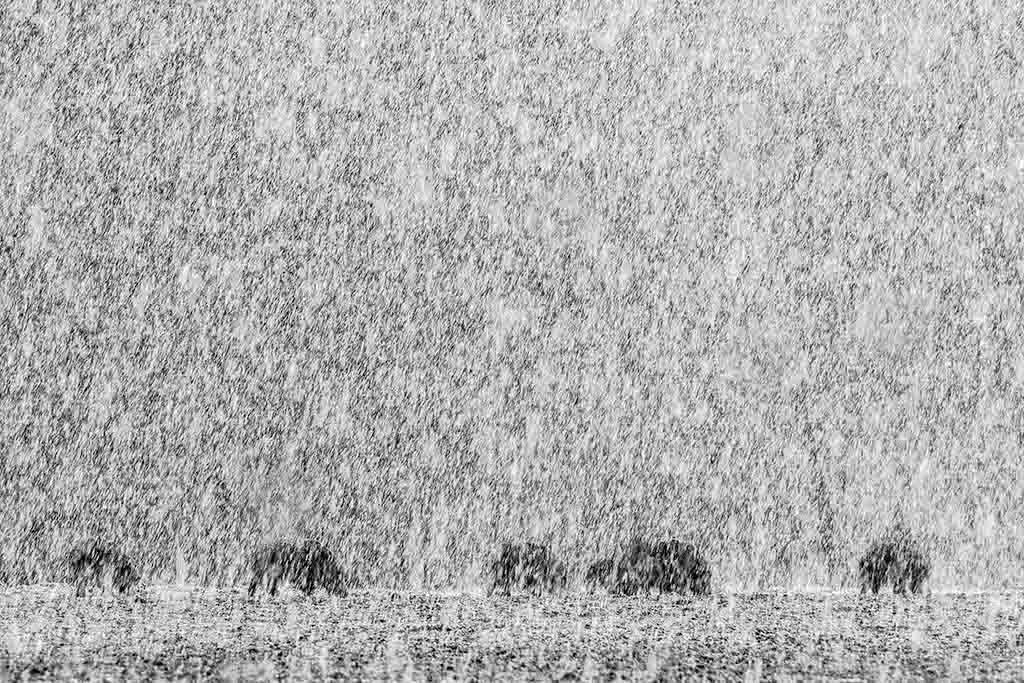 Zwart-wit sneeuwlandschap