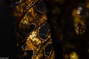 Bizarre patronen bij tegenlicht.  - Fotograaf: Ron Poot