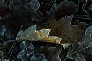 Een randje ijs maakt het beeld meteen interessanter. - Fotograaf: Ron Poot