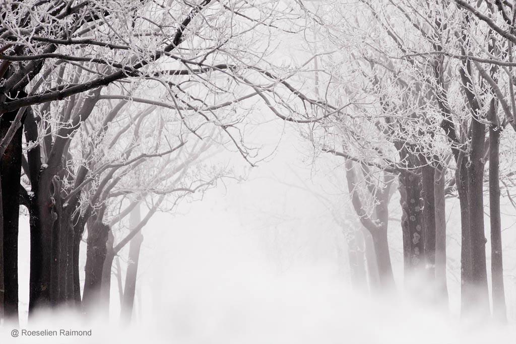 Berijpte bomen in de mist
