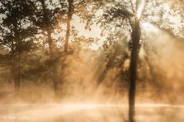 Bob_Luijks-mist