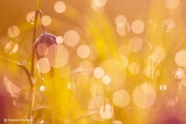 Roeselien_creatieve_natuurfotografie_2