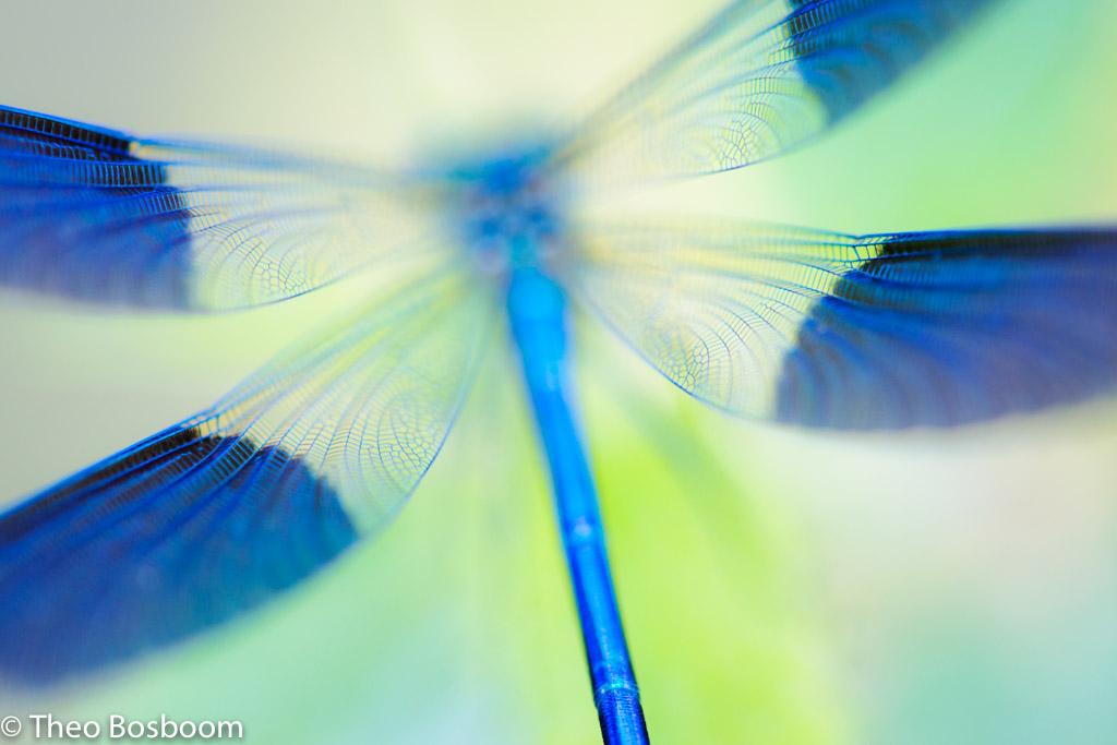 10 tips voor creatieve natuurfotografie