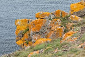 Een rots in Bretagne, de kleur van korstmossen bepaalt het landschap.  - Fotograaf: Ron Poot