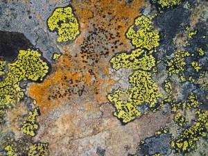Gevarieerde kleurenpatronen in het berglandschap. Het gele korstmos is het bekende landkaartmos. - Fotograaf: Ron Poot