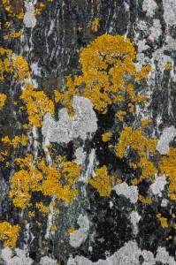 Op een rots aan een fjord in Noorwegen. - Fotograaf: Ron Poot
