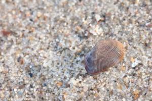 Laag licht en een iets natte schelp zorgen voor een mooie glans. - Fotograaf: Mark van Veen