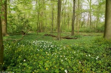 Voorjaarsflora