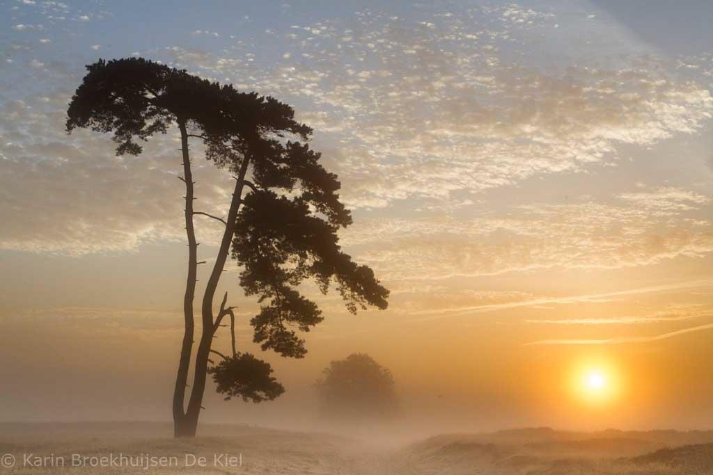 Gebieden fotograferen Natuurfotografie.nl:Aekingerzand