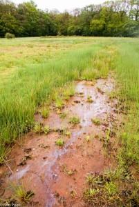 Brongebied in Twente met de roestkleur van ijzerhoudend kwelwater en het kenmerkende olie achtige laagje op het water. - Fotograaf: Ron Poot