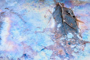 Je herkent ijzerbacteriën aan de regenboogkleuren en het brekende vliezige laagje.  - Fotograaf: Ron Poot