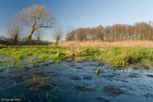 Kikkerdril van bruine kikker in een weilandpoel. Zo laat de foto veel meer zien dan alleen kikkerdril.  - Fotograaf: Paul van Hoof