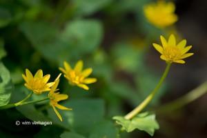 """Meerdere bloemen in de compositie """"meegenomen"""