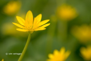 Meerdere bloemen zijn meegenomen in de achtergrond. - Fotograaf: Wim Verhagen