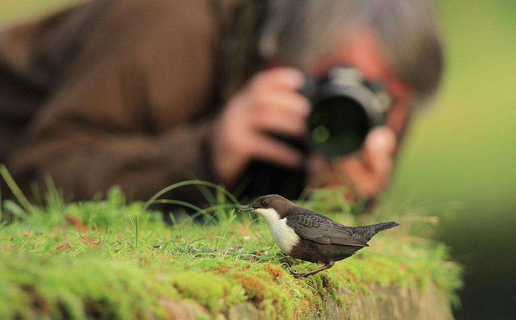 Nederlands Kampioenschap Natuurfotografie 2016