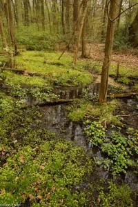Twents bronbos met overvloedig goudveil en dotterbloemen. - Fotograaf: Ron Poot