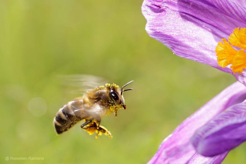 Bij op weg naar nectar