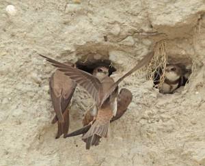 Rumoer rond het nest. - Fotograaf: Lidi de Boer