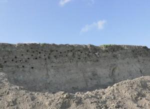 De kolonie in een zandheuvel. - Fotograaf: Lidi de Boer