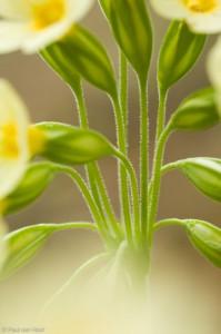 Het bloementrosje leent zich goed voor close-ups.  - Fotograaf: Paul van Hoof
