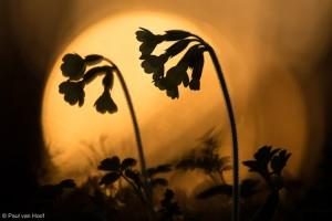 De karakteristieke vorm geeft herkenbare silhouetten.  - Fotograaf: Paul van Hoof