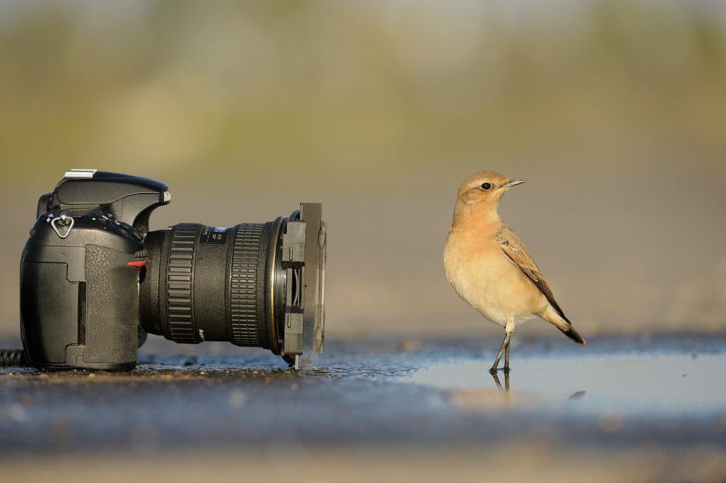 Meld je nu aan voor het NK Natuurfotografie 2016
