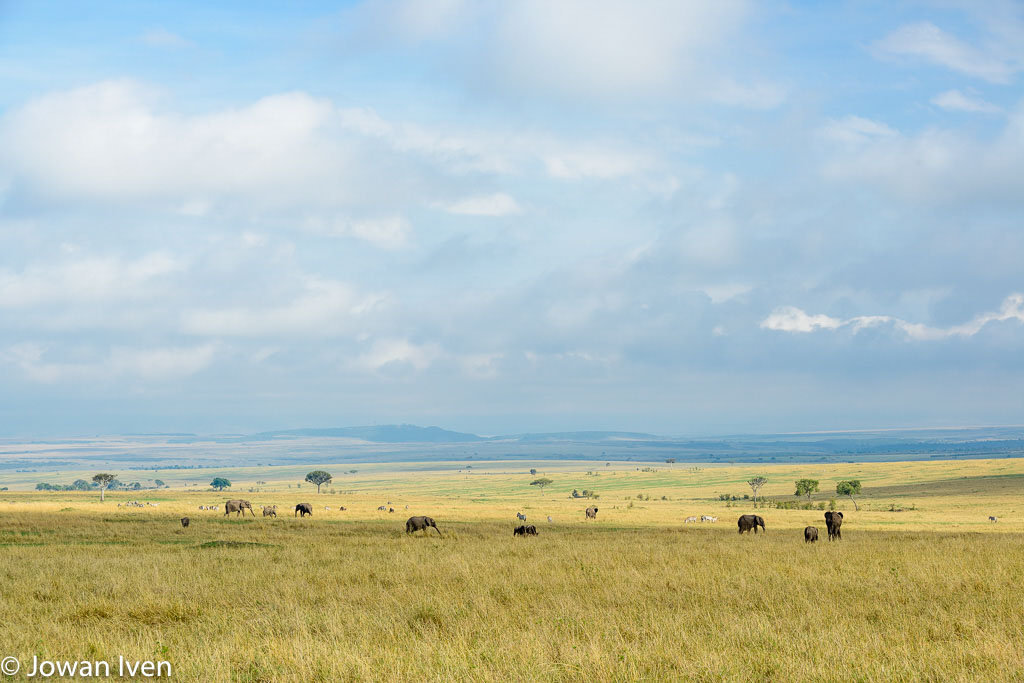 Masai Mara (1)