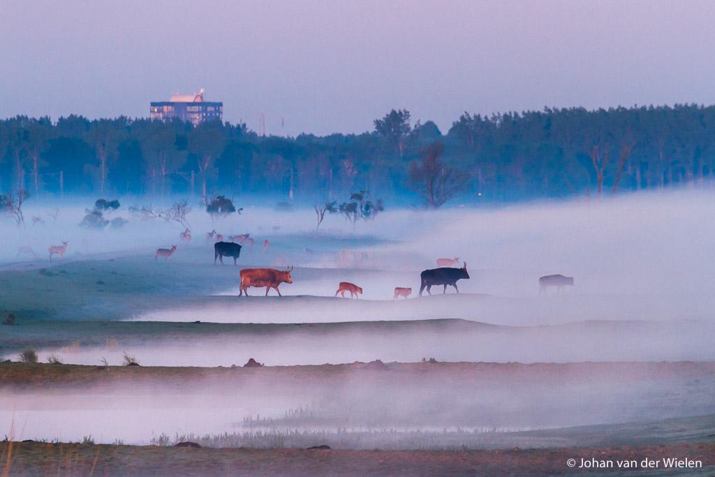 Gebieden fotograferen Natuurfotografie.nl:Oostvaardersplassen