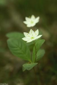 Herhaling van twee bloemen.  - Fotograaf: Ron Poot