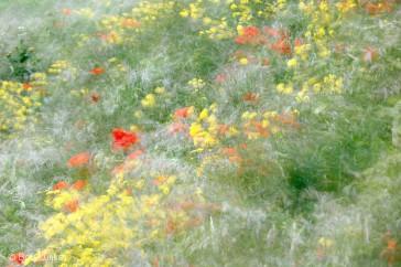 Bob_Luijks-wind_bloemen