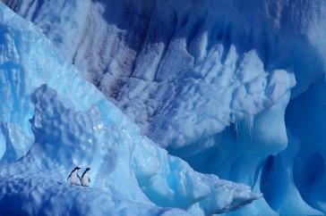 Adelië pinguïn (Antarctica)
