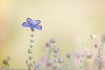 En al die tijd bleef het vlindertje prachtig poseren. Vaak doen zij hun vleugels bij elkaar zodra je de vlinder in de schaduw zet. Deze deed dat gelukkig niet.
