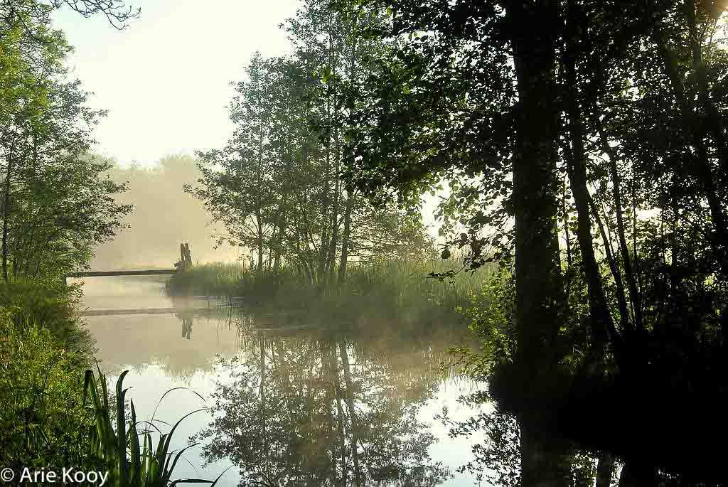 Gebieden fotograferen Natuurfotografie.nl:Berkenwoudse Driehoek