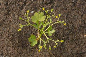 Recht van boven geeft een iets abstracter beeld van de plant. - Fotograaf: Ron Poot