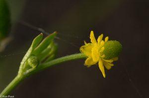 Detailopname:  een bloem van opzij, met ochtenddauw.  - Fotograaf: Ron Poot