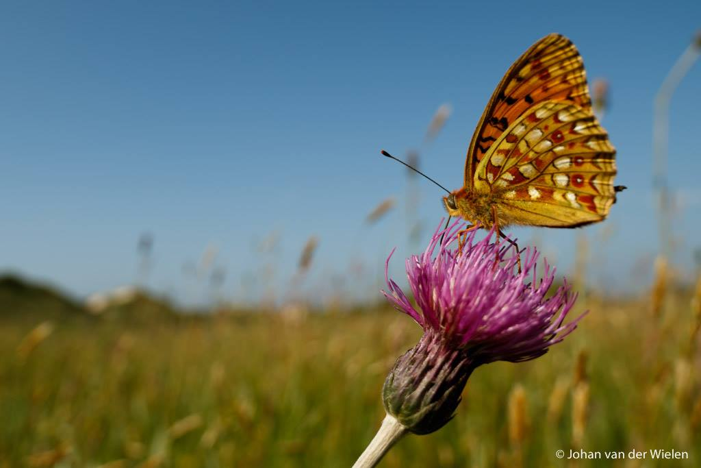 Nieuw thema fotobespreking: insecten