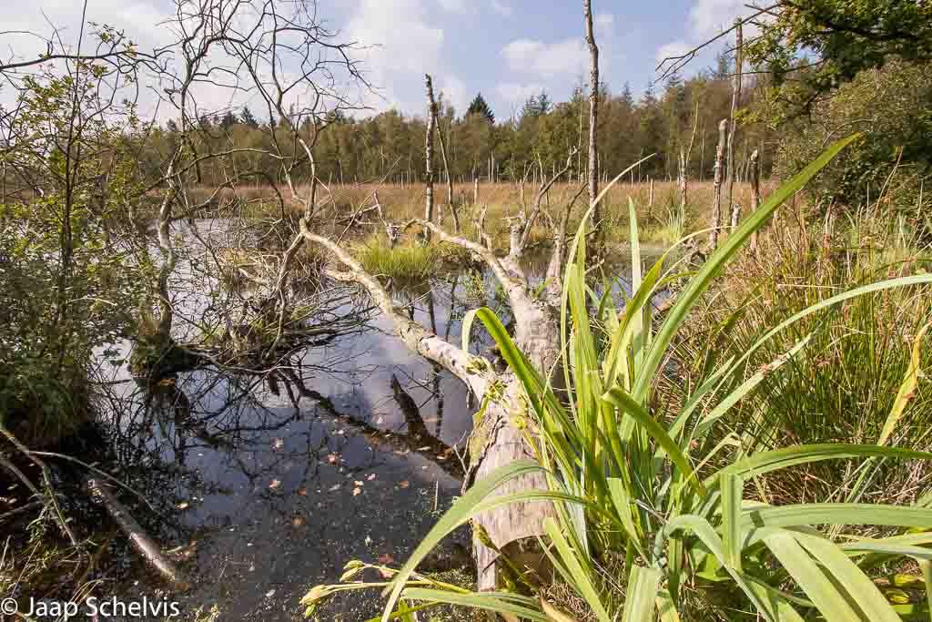 Gebieden fotograferen Natuurfotografie.nl:Fochteloërveen
