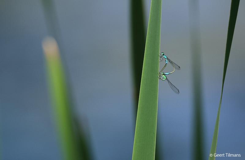 Fotobespreking thema insecten: Francis en Geert