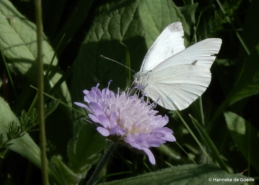 Fotobespreking thema insecten: Hanneke en Tiny
