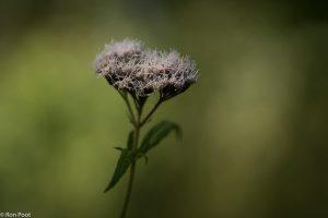 De plant in schaduwrijke omgeving, gebruik gemaakt van een beetje zonlicht op de bloemen.