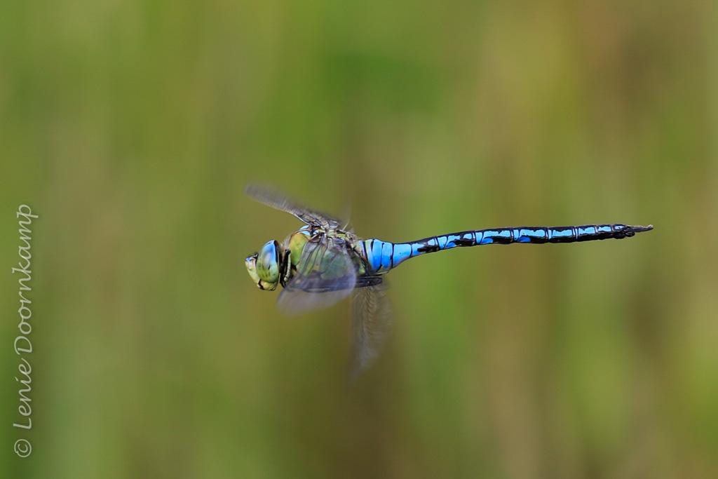 Fotobespreking thema insecten: Lenie en Huub