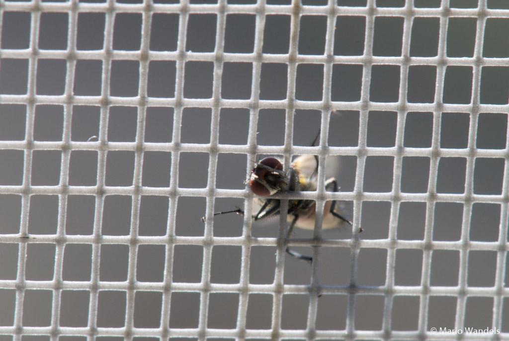 Fotobespreking thema insecten: Mario en Nicolette