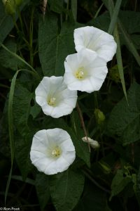 Meerdere bloemen bij elkaar doen het goed op de foto. - Fotograaf: Ron Poot
